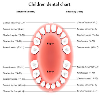 Tooth Eruption Chart - Pediatric Dentist in Council Bluffs, IA